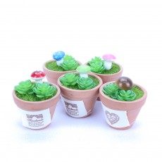 Mini Mushroom In Terracotta Pot Indoor Office Home Room Decoration