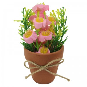 Cute and Colourful Campanula(Bell Flower) in Terracotta Pot Decorative and Gift