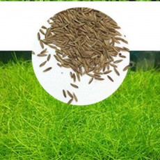 Aquarium Plant Seeds Aquatic Water Grass 6g